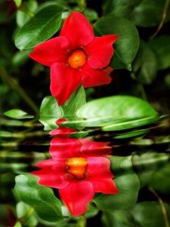 botanic flowers red rocks