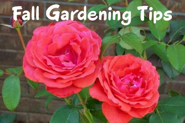 October Gardening Tips In Colorado