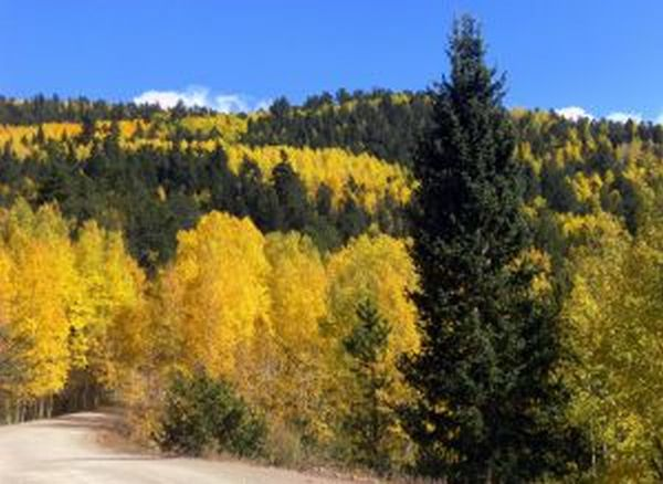 Map Guide To Colorado_Aspens_Fall_Drives