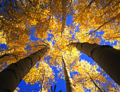 Map Guide To Colorado_Aspens_Fall_DrivesMap Guide To Colorado_Aspens_Fall_Drives