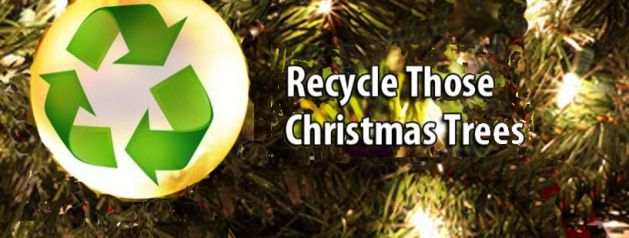Free Christmas Tree Recycling Locations Metro Denver Suburbs